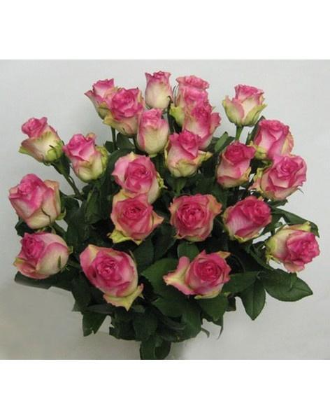 Доставка цветов в город талгар цветы петушки купить